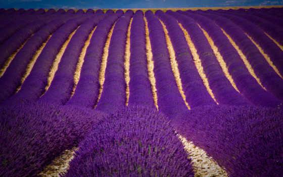 color, purple, cvety, цветов, фиолетовые, темно, поле, margin,