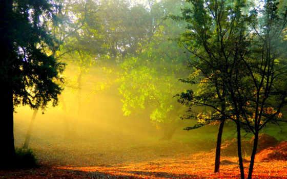 лес, рассвет, утро, trees, sun, туман, rays, природа, дымка,