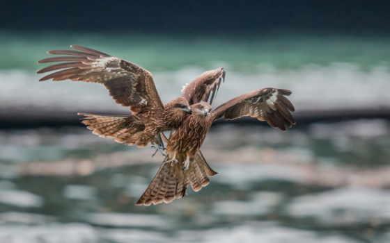 птицы, хищники, falcon, снег, winter, михалыча, гостях, красивых,