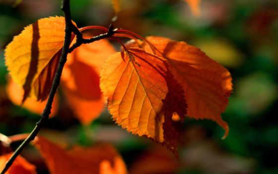 лес, осень, яndex, коллекциях,