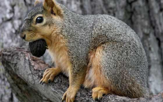 animals, ekorn, bakgrunnsbilder, bakgrunn, squirrels, bilde, cool, bilder,