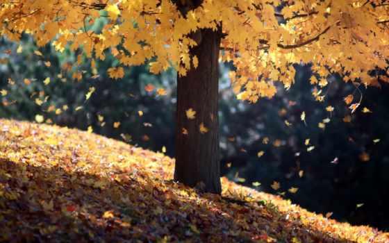 дерево, instagram, kurdinus, осень, страницы, листва, природа, осенью,