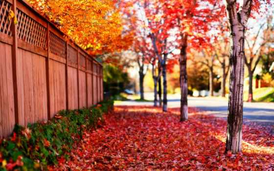 весна, природа, trees, красавица, дерево, landscape, дорога, sun, листва, красивые,