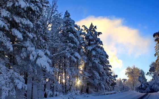 winter, природа, года, плитка, time, снег, trees,