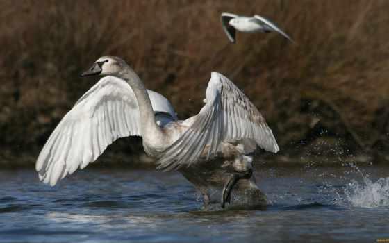 птиц, фотографий, красивые