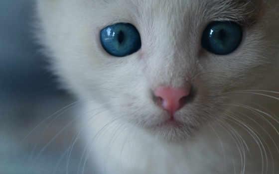 белый кот на рабочий стол, обои пейзажи, пейзажи -