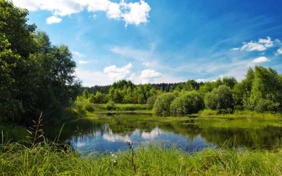 ,лето, июль, зелень, лес, опушка,