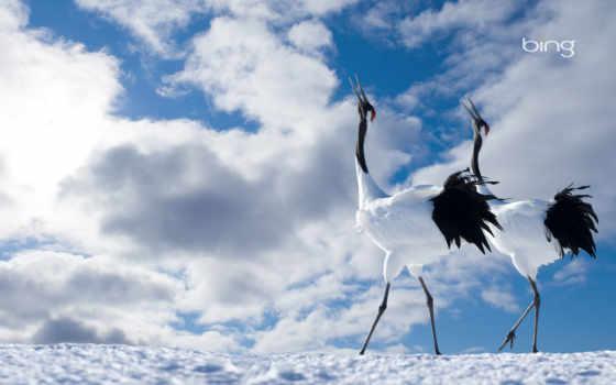 japanese, crane, pair
