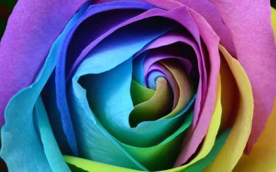 роза, colorful, flowers, desktop, радуга, roses, uhd,
