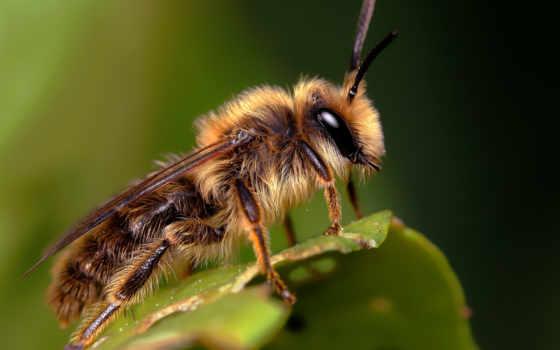 пчела, укусила, пчелы