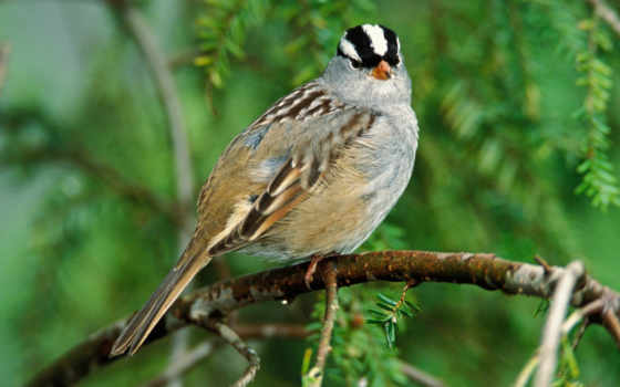 птиц, mir, jivitniy