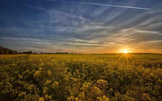 поле, цветы, unsorted, со, полем, рапс, flowers, rising,