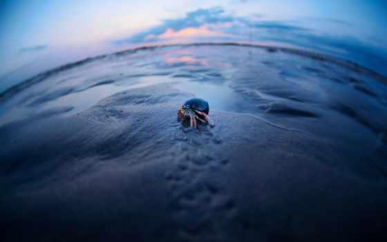 krabbe, crab, desktop, smartphone,