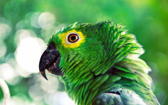 попугай, зелёный, попугаи, птица,