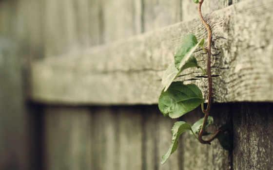 макро, размытие, заборы, дерево, растение, trick, листва, растения, лист,