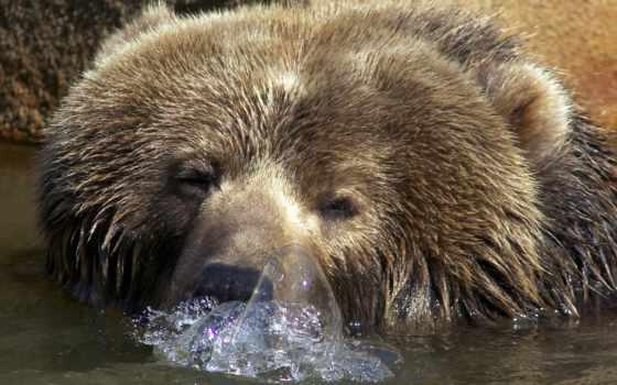 пузыри, water, медведь
