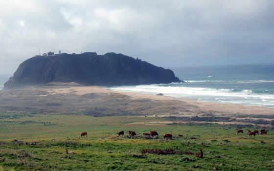 коровы, море