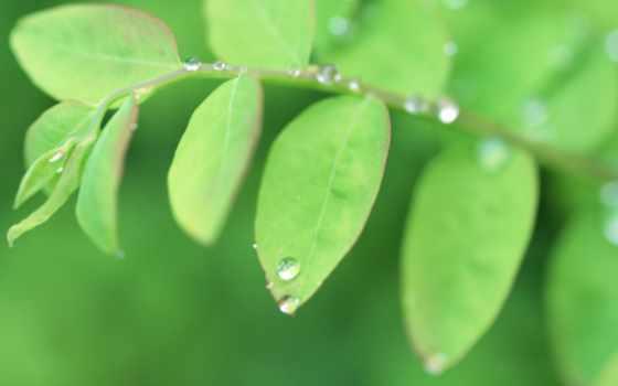зеленые, лето