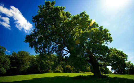 дерево, трава Фон № 22537 разрешение 1920x1080