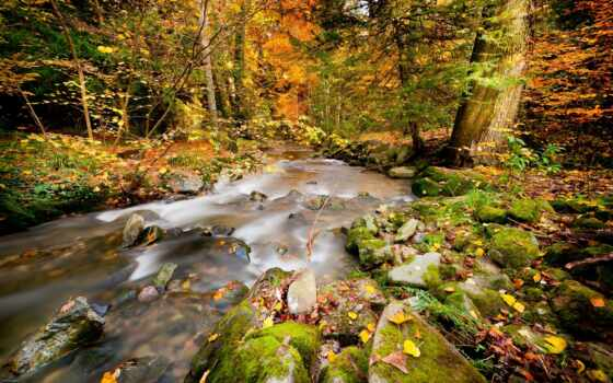 природа, реки, лес