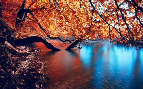 осень, природа, голова