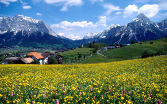 горы, франция, цветы