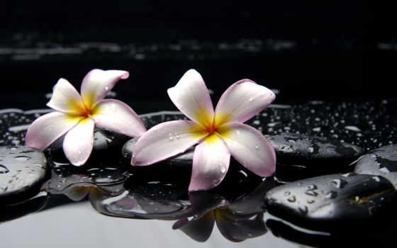 орхидеи, камни, цветы