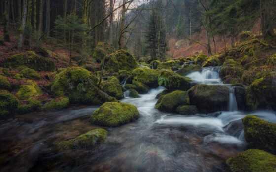 река, камень, германия, fore, мох, ручей, tributary, природа, дерево, баден, württemberg