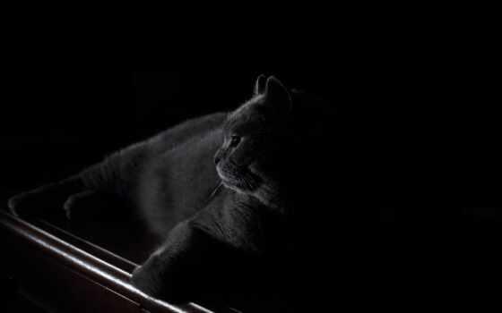кот, black, chartreu, оригинал, черепаха, depth, darkness, ocean, water, под