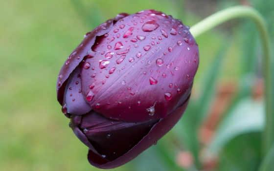 цветы, тюльпаны Фон № 70845 разрешение 2560x1440