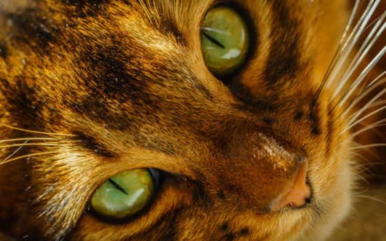 глаза, кот, морда