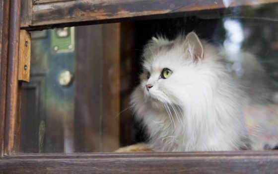 кот, waiting, окно