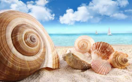 море, ракушки, песок, пляж,