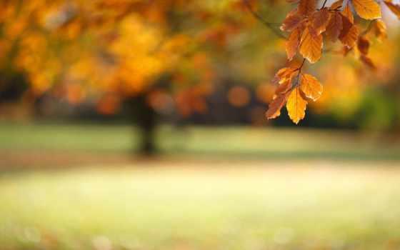 природа, размытость, id, high, фото, resolution, изображение, pacify,