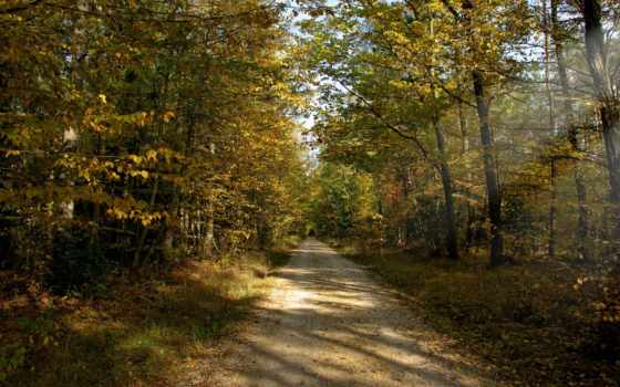 осень, дорога, лес, full, сентябрь, грунтовая, trees, browse,