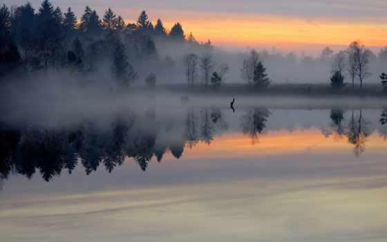 рассвет, туман, лес, утро, озеро, пруд, гладь, природа,