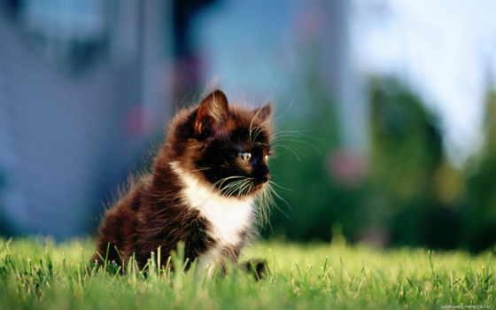 white, кот, котенок, black, кошки, разных, разрешениях, zhivotnye, трава,