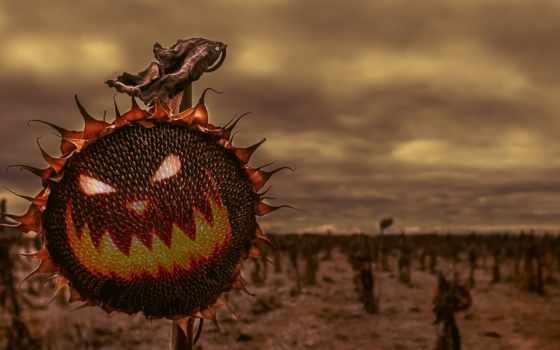 halloween, праздники, holidays, goodfon, easter, тыква, январь, jewelry, black, октябрь,