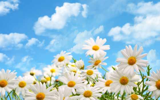 день, февронии, петра, муромских, памяти, святых, любви, semi,