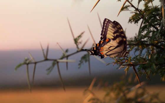 бабочка, ветки