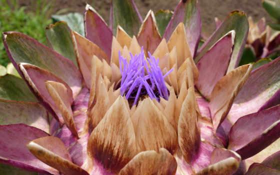 xjyz, flowers, like, widescreen,