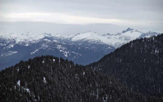 forest, slopes