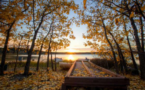осень, sun, листья