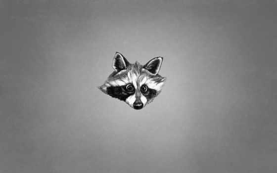 енот, животное, minimalizm