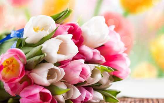 цветы, тюльпаны, букет Фон № 70825 разрешение 2560x1440