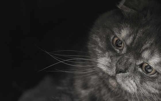 www, кот, фото