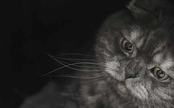 www, кот, фото, веслоухий, this, кошки, imagetext, djshop,