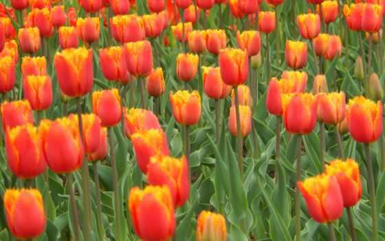 Цветы 100166