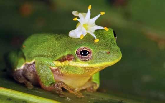 природа, лягушка, цветы
