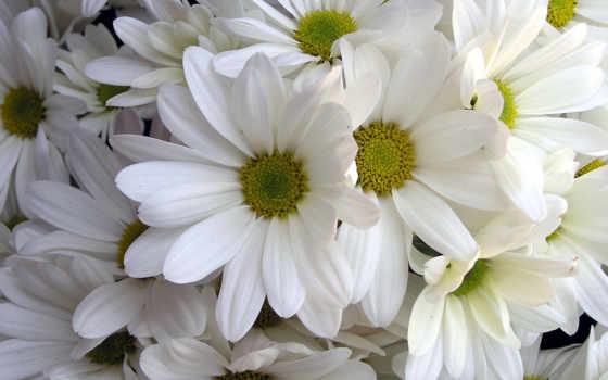 free, цветы, flowers